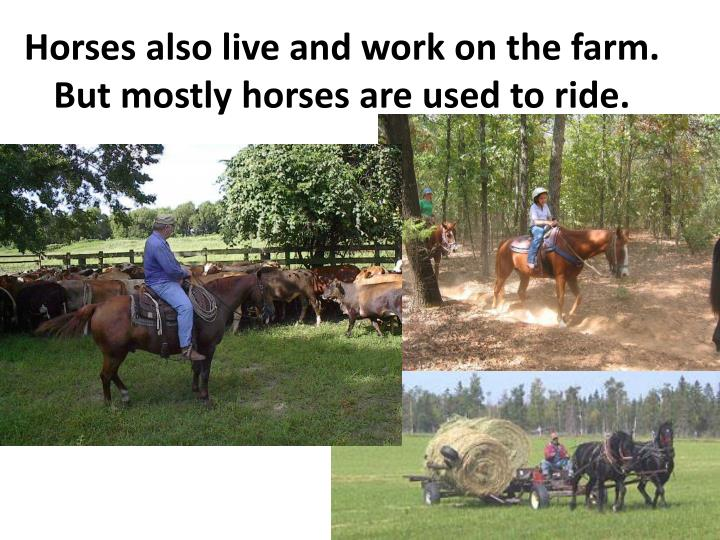 Horses also live and work on the farm. But mostly horses are used to ride.
