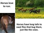 horses love to run