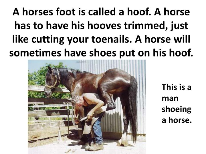 A horses foot is called a hoof. A horse has to have his hooves trimmed, just like cutting your toenails. A horse will sometimes have shoes put on his hoof.