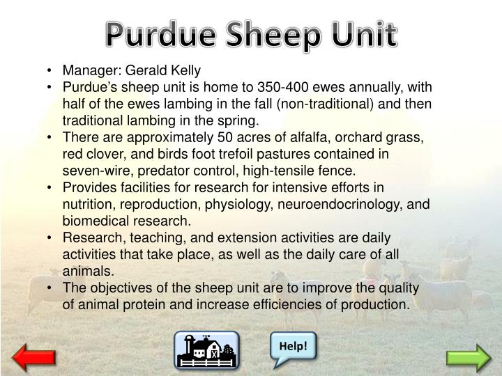 Purdue Sheep Unit