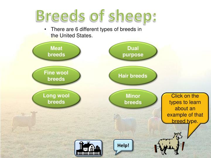 Breeds of sheep: