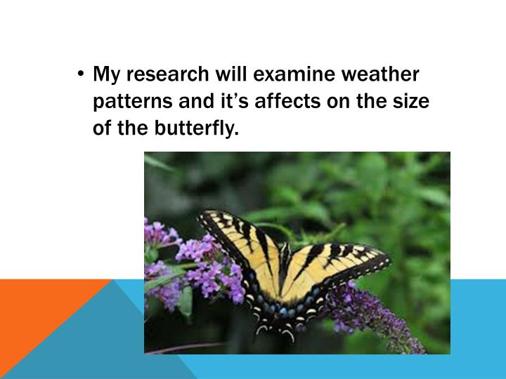 My research will examine weather patterns and it's affects on the size of the butterfly.