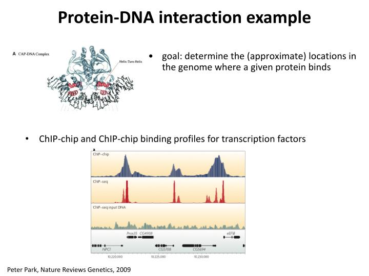 Protein-DNA interaction example