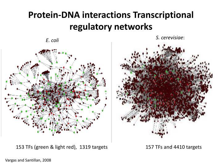 Protein-DNA interactions Transcriptional regulato