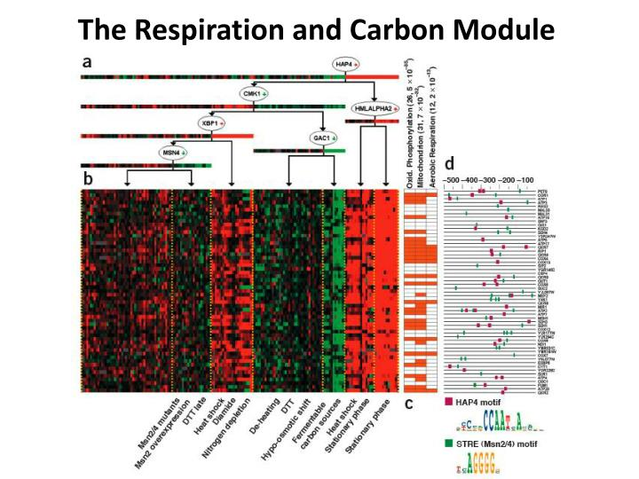 The Respiration and Carbon Module