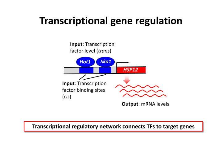 Transcriptional gene regulation