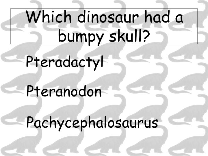 Which dinosaur had a bumpy skull?