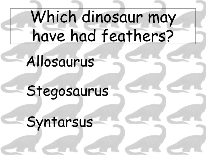 Which dinosaur may have had feathers?
