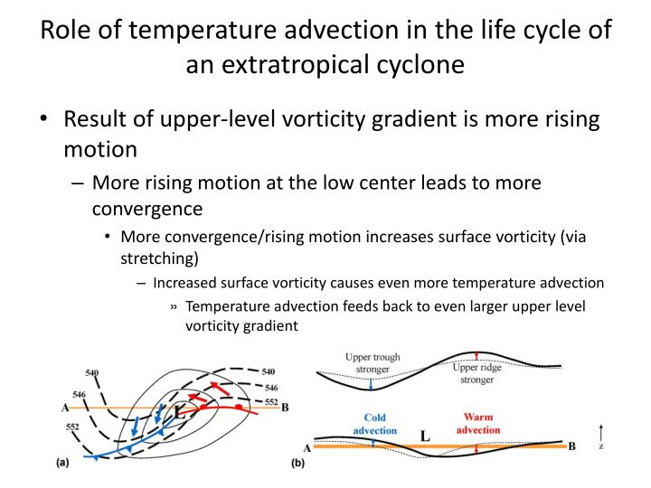 Role of temperature advection in the life cycle of an