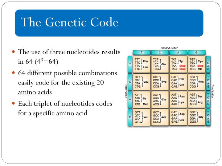 The use of three nucleotides results