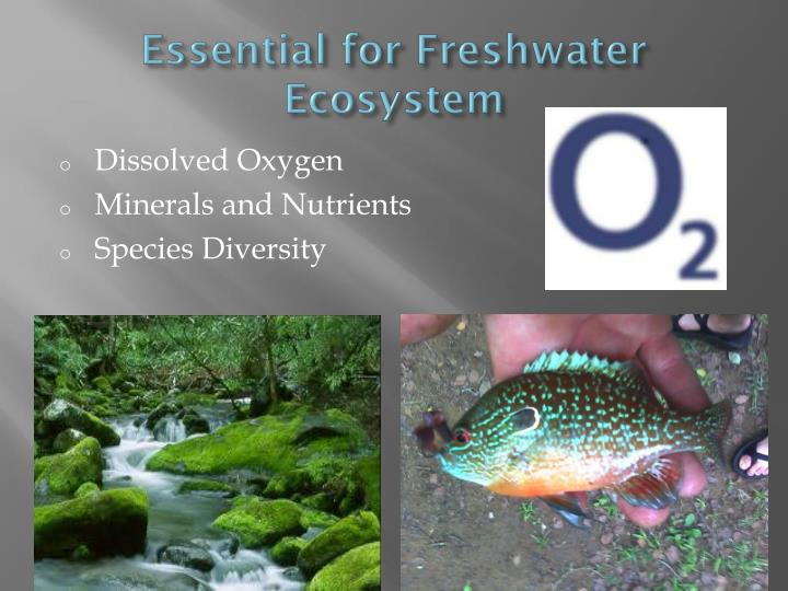 Essential for Freshwater Ecosystem