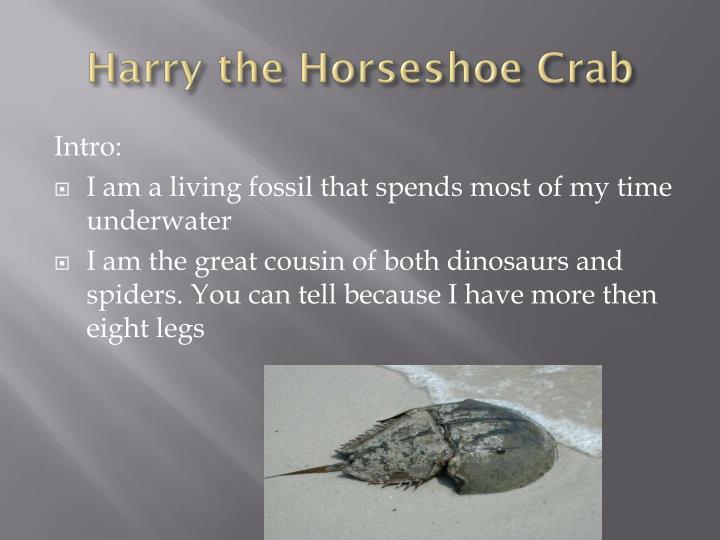 Harry the Horseshoe Crab