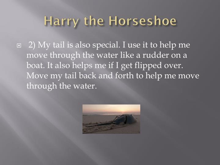 Harry the Horseshoe