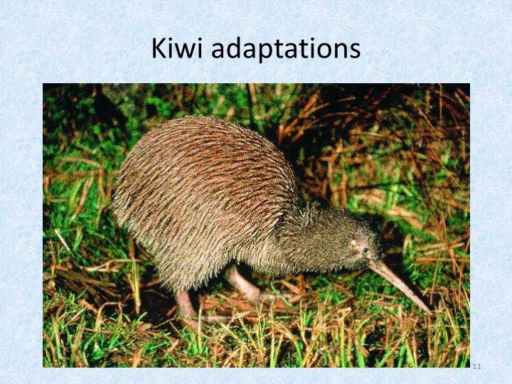Kiwi adaptations