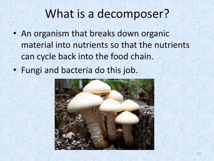 What is a decomposer?