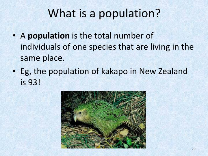 What is a population?