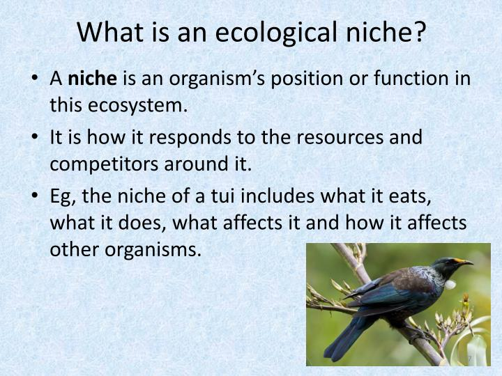 What is an ecological niche?