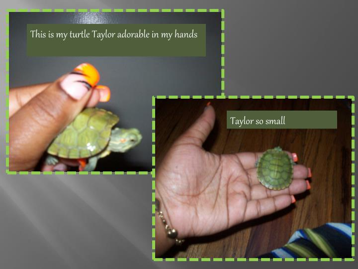 This is my turtle Taylor adorable in my hands