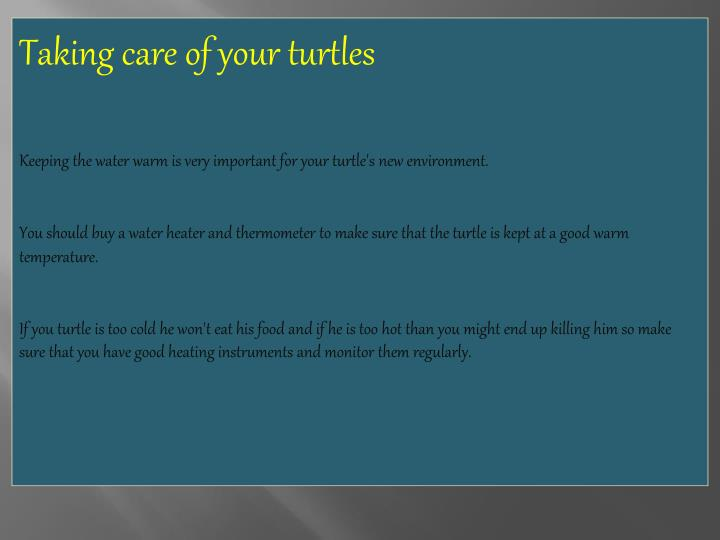 Taking care of your turtles