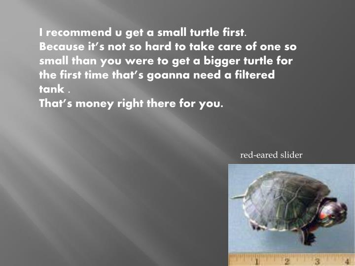 I recommend u get a small turtle first.