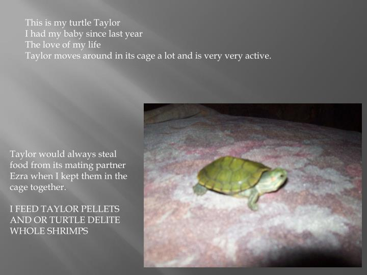 This is my turtle Taylor