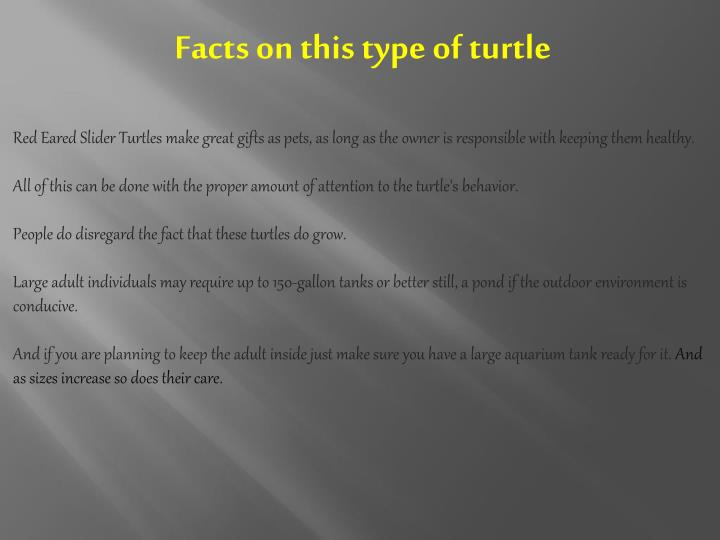Facts on this type of turtle