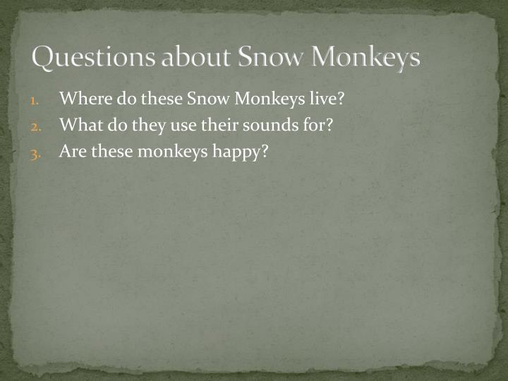 Questions about Snow Monkeys