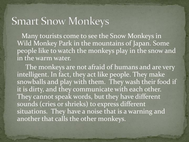 Smart Snow Monkeys