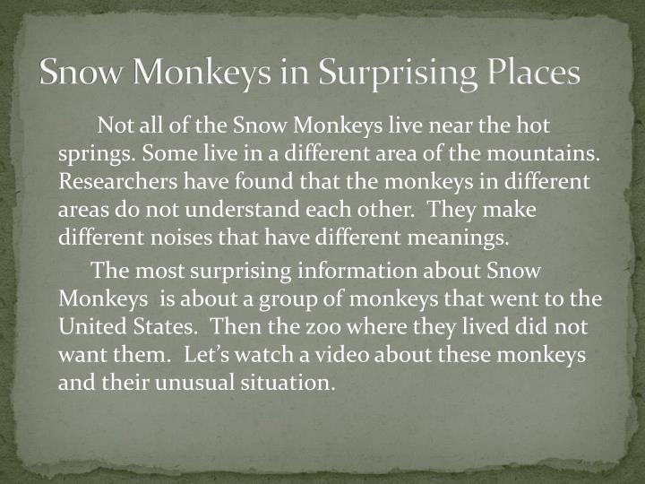 Snow Monkeys in Surprising Places