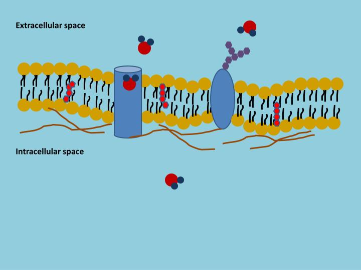 Extracellular space