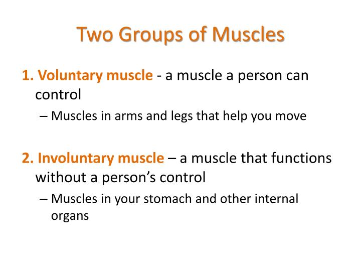 Two Groups of Muscles