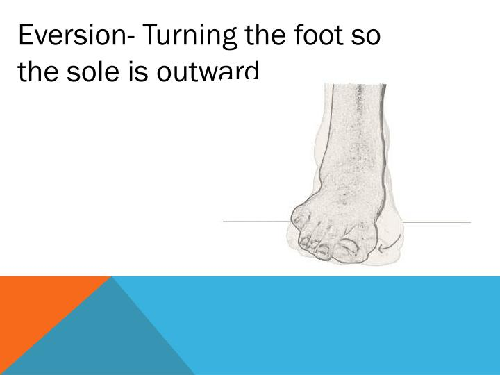 Eversion- Turning the foot so the sole is outward