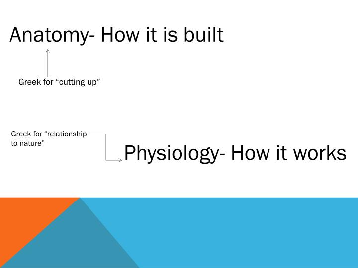 Anatomy- How it is built