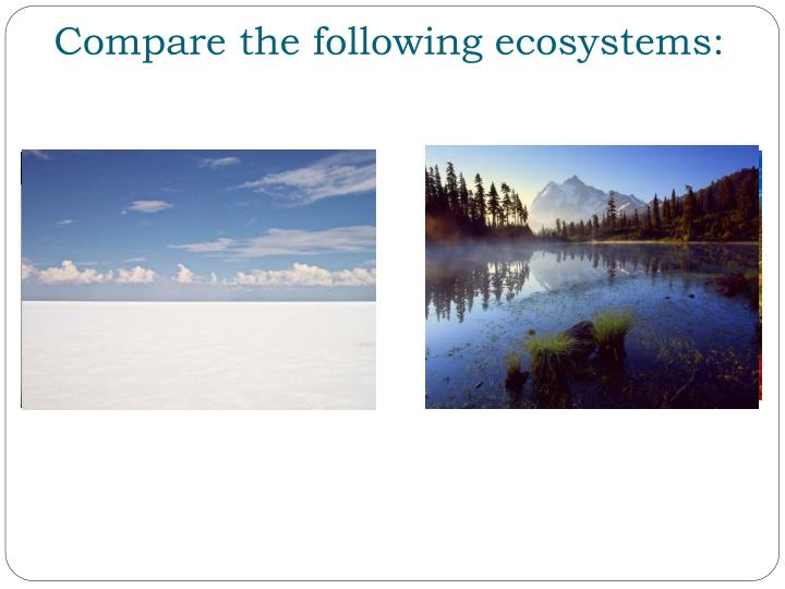 Compare the following ecosystems: