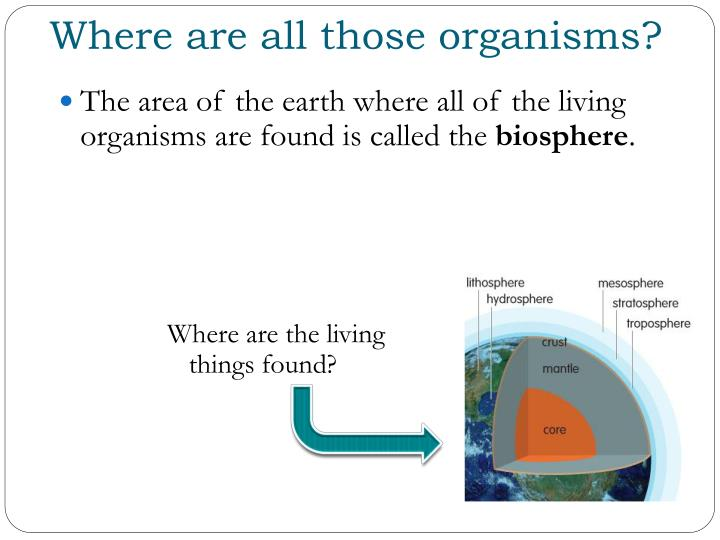 Where are all those organisms?