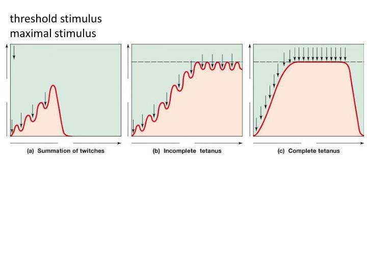 threshold stimulus