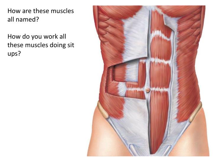 How are these muscles all named?