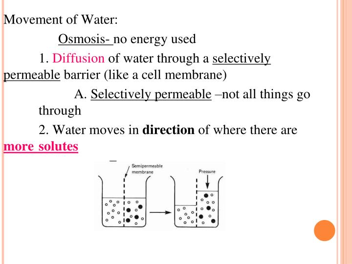 Movement of Water: