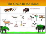 the chain in the hood