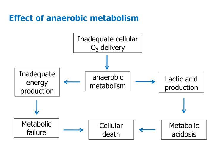 Effect of anaerobic metabolism