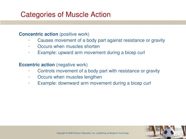 Categories of Muscle Action