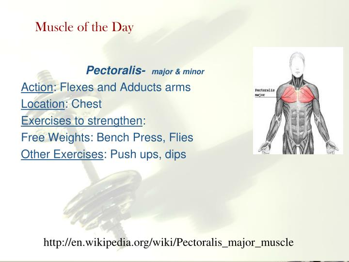 Muscle of the Day