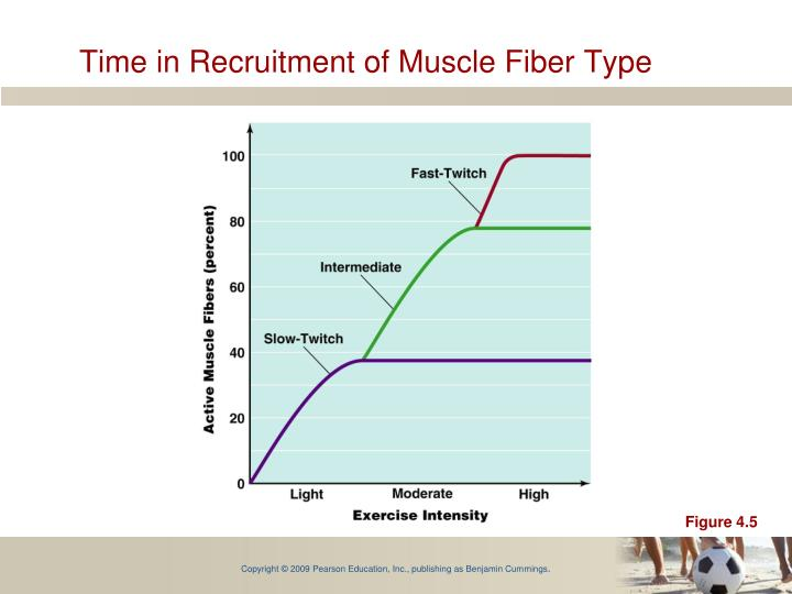 Time in Recruitment of Muscle Fiber Type