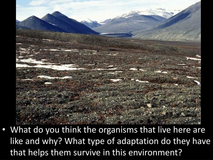 What do you think the organisms that live here are like and why? What type of adaptation do they have that helps them survive in this environment?