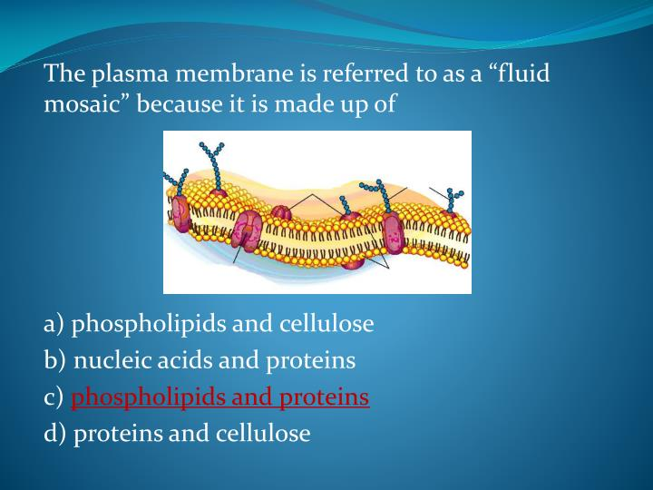 """The plasma membrane is referred to as a """"fluid mosaic"""" because it is made up of"""