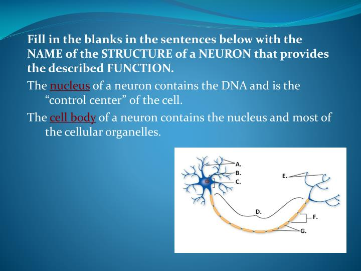 Fill in the blanks in the sentences below with the NAME of the STRUCTURE of a NEURON that provides the described FUNCTION.