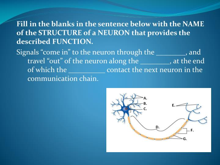 Fill in the blanks in the sentence below with the NAME of the STRUCTURE of a NEURON that provides the described FUNCTION.