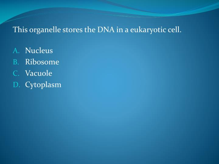 This organelle stores the DNA in a eukaryotic cell.