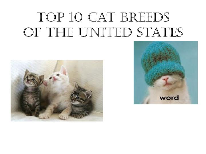 Top 10 cat breeds of the united states