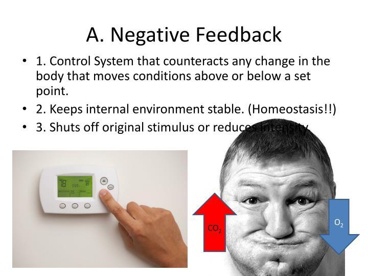 A. Negative Feedback
